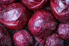 Ώριμο κόκκινο λάχανο Στοκ εικόνες με δικαίωμα ελεύθερης χρήσης