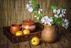 Ώριμο μήλο και ανθίζοντας κλάδος ενός Apple-δέντρου σε ένα βάζο αργίλου Στοκ Φωτογραφίες