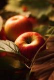 Ώριμο μήλο στα φύλλα Στοκ εικόνες με δικαίωμα ελεύθερης χρήσης