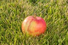 Ώριμο μήλο στη χλόη Στοκ εικόνες με δικαίωμα ελεύθερης χρήσης
