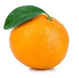 Ώριμο μανταρίνι με την κινηματογράφηση σε πρώτο πλάνο φύλλων σε ένα άσπρο υπόβαθρο Tangerine πορτοκάλι με το φύλλο σε ένα άσπρο υ Στοκ φωτογραφίες με δικαίωμα ελεύθερης χρήσης