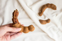 Ώριμο ξεφλουδισμένο tamarind στο θηλυκό χέρι Στοκ εικόνες με δικαίωμα ελεύθερης χρήσης
