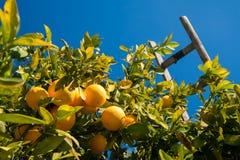ώριμο χρονικό δέντρο επίγειων συγκομιδών κήπων μήλων Στοκ εικόνα με δικαίωμα ελεύθερης χρήσης