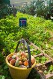 ώριμο χρονικό δέντρο επίγειων συγκομιδών κήπων μήλων Στοκ Εικόνα