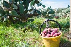 ώριμο χρονικό δέντρο επίγειων συγκομιδών κήπων μήλων Στοκ φωτογραφίες με δικαίωμα ελεύθερης χρήσης