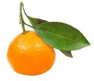Ώριμο abkhazian tangerine με τα φύλλα που απομονώνονται Στοκ Εικόνες