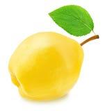 Ώριμο Apple-κυδώνι το πράσινο φύλλο που απομονώνεται με Στοκ Φωτογραφίες