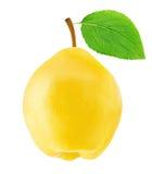 Ώριμο Apple-κυδώνι το πράσινο φύλλο που απομονώνεται με Στοκ Εικόνα