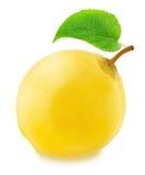 Ώριμο Apple-κυδώνι το πράσινο φύλλο που απομονώνεται με Στοκ Εικόνες