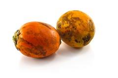Ώριμο areca καρύδια ή betel - καρύδια Στοκ φωτογραφίες με δικαίωμα ελεύθερης χρήσης