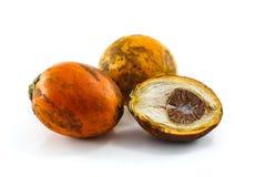 Ώριμο areca καρύδια ή betel - καρύδια στοκ φωτογραφίες