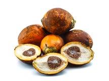 Ώριμο areca καρύδια ή betel - καρύδια στοκ φωτογραφία