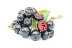 Ώριμο melanocarpa Chokeberry ή Aronia που απομονώνεται στο άσπρο υπόβαθρο Στοκ εικόνες με δικαίωμα ελεύθερης χρήσης