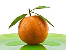 ώριμο tangerine Στοκ Φωτογραφία