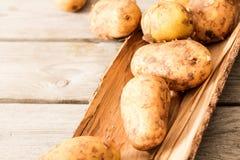 ώριμο vykapannaya πατατών ακριβώς Στοκ εικόνα με δικαίωμα ελεύθερης χρήσης