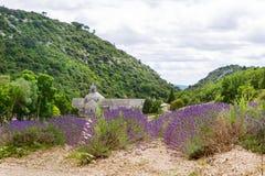 аббатство зацветая европа цветет senanque vaucluse рядков Провансали luberon лаванды gordes Франции Стоковое фото RF