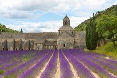 аббатство зацветая европа цветет senanque vaucluse рядков Провансали luberon лаванды gordes Франции Стоковые Изображения
