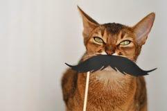 Абиссинский кот с бумажным усиком на белой предпосылке Крупный план кота любимчика с copyspace стоковое фото
