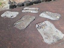 Аборигенное искусство на больших установленных следах ноги тимберса Стоковая Фотография
