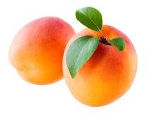 2 абрикоса изолированного на белой предпосылке Стоковые Изображения