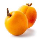 абрикосы зрелые 2 Стоковая Фотография
