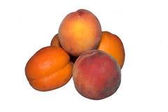 Абрикосы и персики Стоковое фото RF
