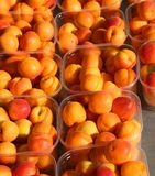 Абрикосы свеже выбрали от деревьев для продажи на плодоовощ mar стоковая фотография rf