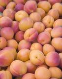 абрикосы свежие Стоковое Фото