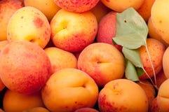 абрикосы Стоковое Фото