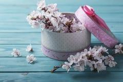Абрикос коробки цветка цветения весны на голубой деревянной предпосылке Стоковые Изображения