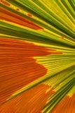 абстрактная ладонь листьев Стоковое Фото