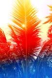 абстрактная ладонь листьев Стоковое фото RF