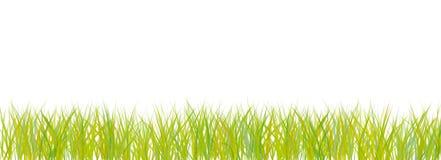 абстрактная белизна травы Стоковые Фотографии RF