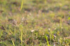 абстрактная весна предпосылки естественное предпосылки зеленое Стоковые Фотографии RF