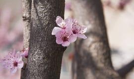 абстрактная весна пущи Стоковое Фото