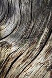 Абстрактная волнистая деревянная деталь Стоковое Изображение