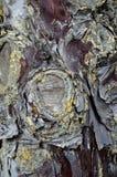 Абстрактная деревянная кора текстуры, кипарис Завод, швырок стоковое фото