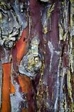 Абстрактная деревянная кора текстуры, кипарис Завод, швырок стоковые фотографии rf