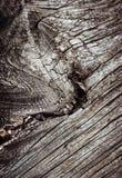 Абстрактная деталь старой сухой древесины Стоковое фото RF