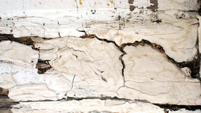 абстрактная древесина текстуры Стоковая Фотография