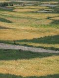 Абстрактная естественная предпосылка желтых полей с зрелыми пшеницей и треугольниками зеленой травы Стоковые Изображения