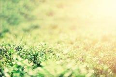 Абстрактная естественная предпосылка с светлым влиянием bokeh и утечек Трава в концепции лета леса скопируйте космос знамена мягк стоковые изображения rf