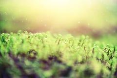 Абстрактная естественная предпосылка с светлым влиянием bokeh и утечек Трава в концепции лета леса скопируйте космос знамена мягк стоковое фото rf