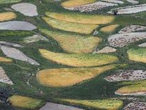 Абстрактная естественная предпосылка чередуя полей желтого и зеленого цвета Стоковые Фотографии RF