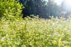 Абстрактная естественная предпосылка с травой и цветками во время захода солнца Стоковое фото RF