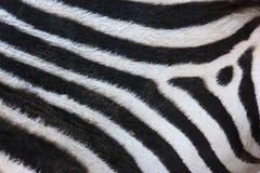 абстрактная зебра нашивки предпосылки Стоковая Фотография RF