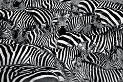абстрактная зебра Стоковые Фото