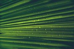 Абстрактная зеленая ладонь выходит природа с падением дождя Стоковое Фото