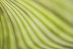абстрактная зеленая линия бесплатная иллюстрация