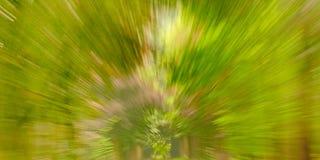 Абстрактная зеленая предпосылка с радиальными линиями стоковые фото